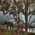Elephants in north Thailand by Laurent Hunziker