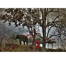 Elephants in north Thailand Photographic Print