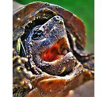 baby turtle Photographic Print