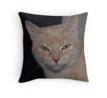 cat out of the box Throw Pillow