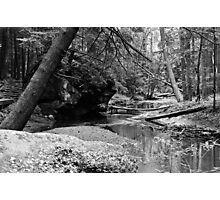 Sticks and stones along the creek bed Photographic Print
