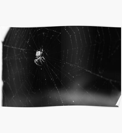 Creepy Spider Poster