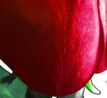 Rose Red. Sticker