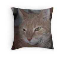 cat out of the box #2 Throw Pillow