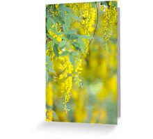 Golden chain tree  Greeting Card