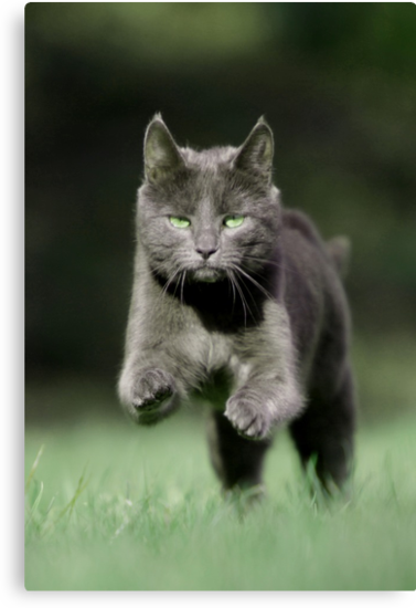 Paused paws by Nik Jowsey