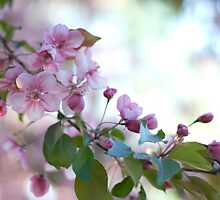 Blooming Buds by Crystal Zacharias
