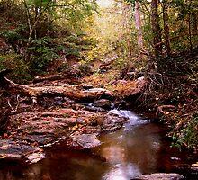 Fall Colors at Elders Bridge by dawiz1753