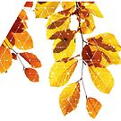 Nature and Geometry - Yellow Leaves  by Denis Marsili