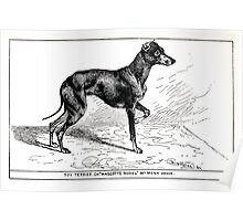 All about dogs a book for doggy people Charles Henry Lane 1900 0293 Toy Terrier_jpg Poster