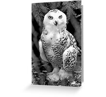 Snow Owl Baby Greeting Card
