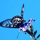 Butterfly Dance by sandysartstudio