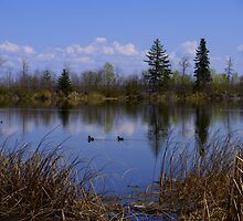 out for a swim by Cheryl Dunning