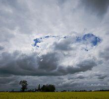 Rapeseed Field - Aythorpe Roding by Nigel Bangert