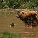 A Grizzly Encounter by Heather Haderly