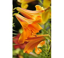 "Trumpet Lily ""African Queen"" Photographic Print"