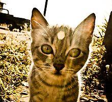 Sunset Cat by JesusLopez