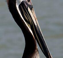 A Pelican Pose by Regenia Brabham