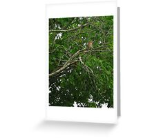 Birdie Sitting on Branch Greeting Card