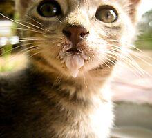 Kitty Drinking Milk by JesusLopez
