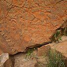 Petroglyphs by Nolan Nitschke