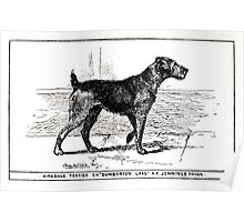 All about dogs a book for doggy people Charles Henry Lane 1900 0231 Airedale Terrier_jpg Poster