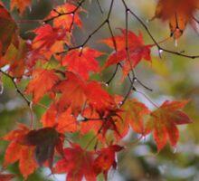 Rainy Autumn Maple Sticker