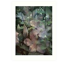 Clematis foliage Art Print