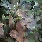 Clematis foliage by Fiery-Fire