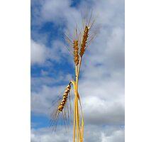 Wheat Stalk Statue Photographic Print