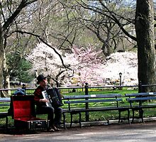 Music in the Park by Patricia127