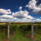 Mudgee Vineyards by David Haworth