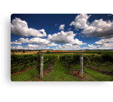 Mudgee Vineyards Canvas Print