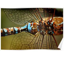 Dragonfly Patterns Poster