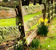 Spring is on the Way by Elysian Photography