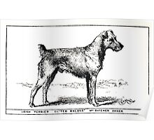 All about dogs a book for doggy people Charles Henry Lane 1900 0227 Irish Terrier_jpg Poster
