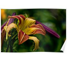 "Daylily ""Coburg Fright Wig"" Poster"