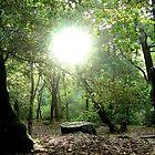 UVAS CANYON California Sun through the trees by OPTATIVE