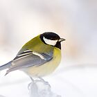 Great Tit in Steam and Snow by Janika