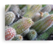Cacti in Focus Canvas Print