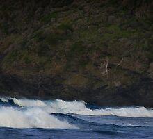Surf, Blinky Beach, Lord Howe Island by TimC