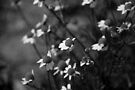 Black and White Cute Flowers by Denis Marsili - DDTK