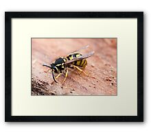 Sleepy Wasp Framed Print