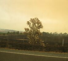 Yarra Glen road after Black Saturday by minarri