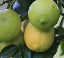 Lemons by AlexKokas