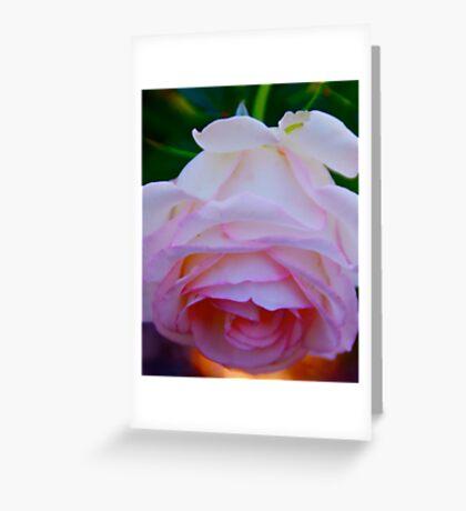 Carnation Pink Greeting Card
