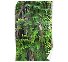 Tree Trunk Ivy  Poster
