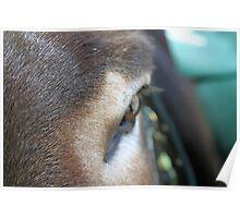 The Donkey's Eye Poster