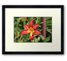 Red Life Framed Print