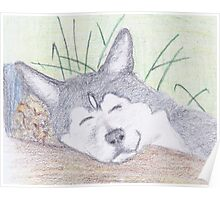 Sleeping Husky in Colored Pencil Poster
